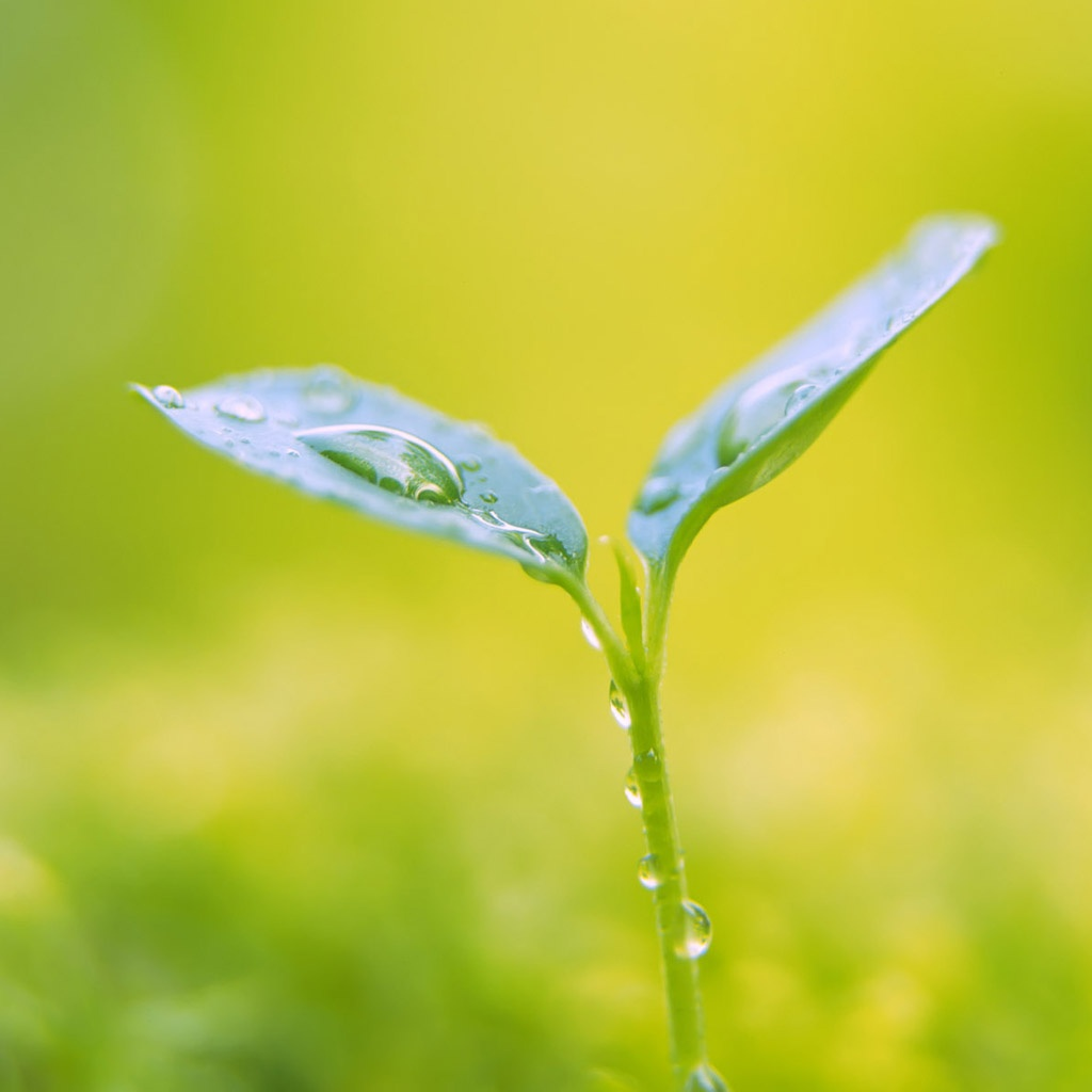 growing-leaf-ipad-wallpaper-ilikewallpaper_com